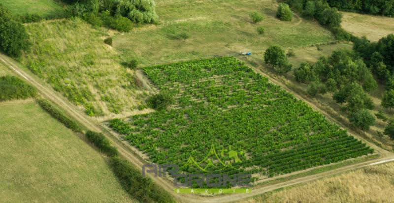 Analyse agricole.jpg
