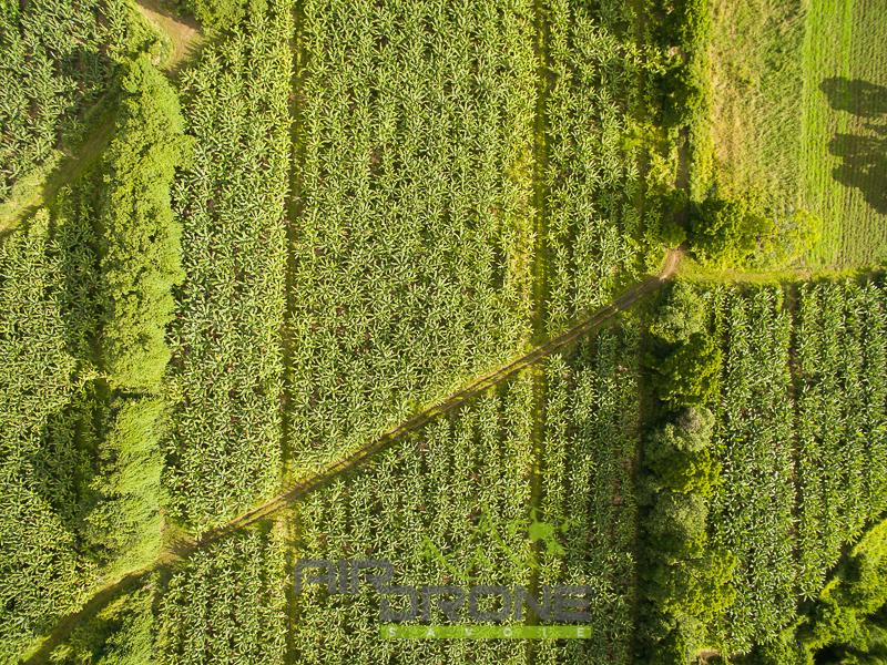 Plantation Guadeloupe